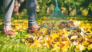 Autumn is a great time for yard work – but make sure you stay healthy!